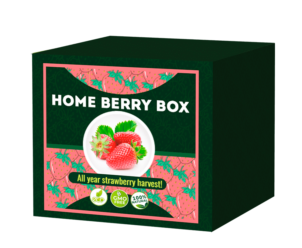 Home Berry Box Mis see on? Näidustused