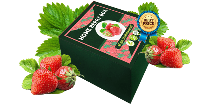 Home Berry Box Struktuur